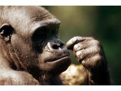 obrázek Opice-0223