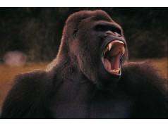 obrázek Opice-0224
