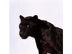 obrázek Puma-0248