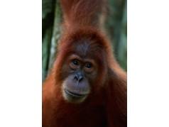 obrázek Opice-0258
