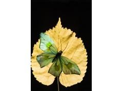 obrázek Motýl-0319