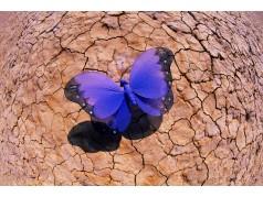 obrázek Motýl-0324