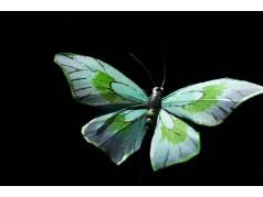 obrázek Motýl-0325