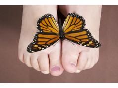 obrázek Motýl-0326
