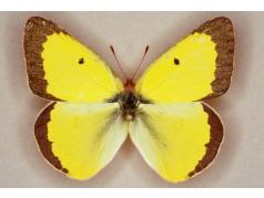 obrázek Motýl-0327