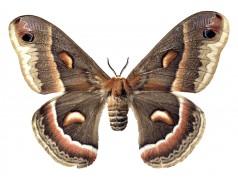 obrázek Motýl-0329