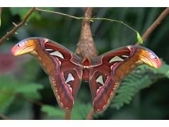 obrázek Motýl-0330