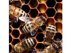 obrázek Včely-0333