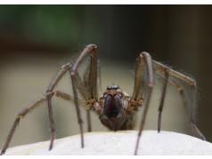 obrázek Pavouk-0345