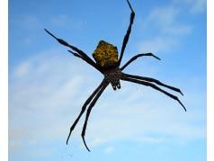 obrázek Pavouk-0347