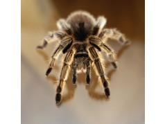 obrázek Pavouk-0348