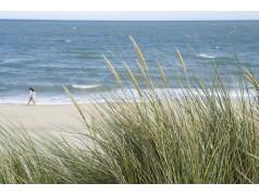 obrázek Pláž-0361
