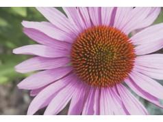 obrázek Květina-0384