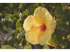 obrázek Květina-0386