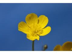 obrázek Květina-0387