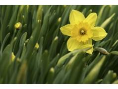 obrázek Květina-0388