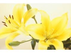 obrázek Květiny-0390
