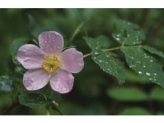 obrázek Květina-0391