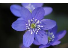 obrázek Květina-0393