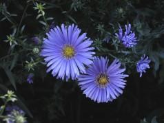 obrázek Květiny-0400