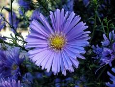 obrázek Květina-0401