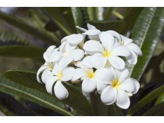 obrázek Květiny-0402