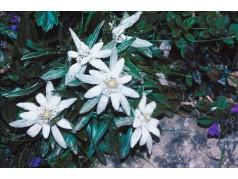 obrázek Květiny-0404