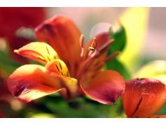 obrázek Květiny-0406