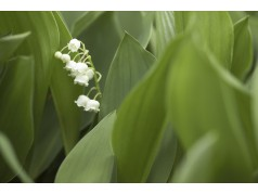 obrázek Rostlina-0415
