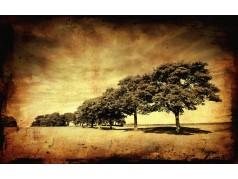 obrázek Stromy-0450