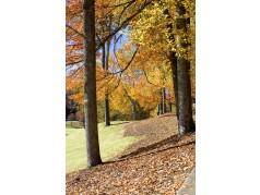 obrázek Podzim-0465