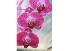 obrázek Květy-0485