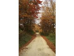 obrázek Podzim-0488