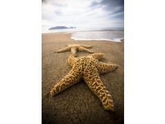 obrázek Moře-0491