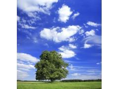 obrázek Strom-0505