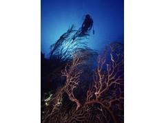 obrázek Podmořský svět-0552