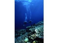 obrázek Podmořský svět-0553