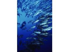 obrázek Podmořský svět-0554
