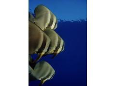 obrázek Podmořský svět-0556