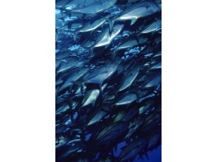 obrázek Podmořský svět-0557