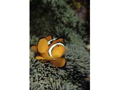 obrázek Podmořský svět-0559