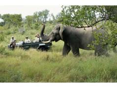 obrázek Safari-079