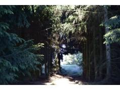 obrázek Příroda-0008