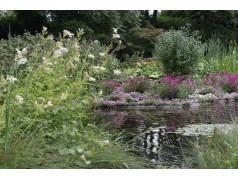 obrázek Květiny-00049