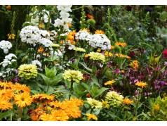 obrázek Květiny-00050