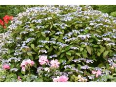 obrázek Květiny-00054