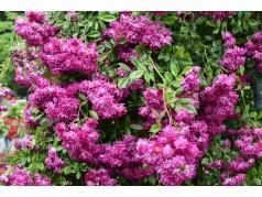 obrázek Květiny-00056
