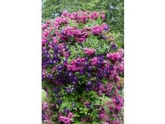 obrázek Květiny-00057