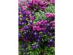obrázek Květiny-00058
