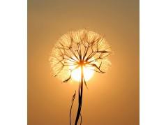 obrázek Slunce-0001-P